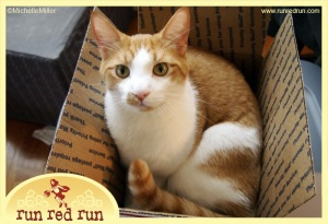 Run Red Run Bing the Cat The Cat Brothers Needle Felting